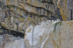 Seabirds on cliffs Royalty Free Stock Photos