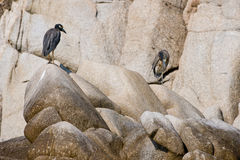 Seabirds on coastal boulders Stock Photo