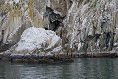 Seabirds on coastal cliffs royalty free stock photos