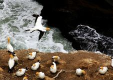 Seabirds. A group of sea birds resting on the shore Stock Image