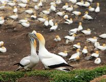 Seabirds. A group of sea birds resting on the shore Stock Photography