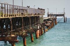 Seabirds kolonia Zdjęcia Royalty Free