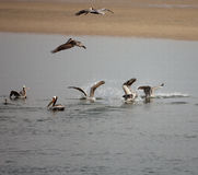 Seabirds Moving Royalty Free Stock Photos