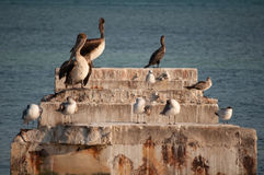 Seabirds and ocean. Seabirds standing on stone structure with ocean in background Stock Images