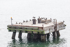 Seabirds on an Old Concrete Pier Royalty Free Stock Images