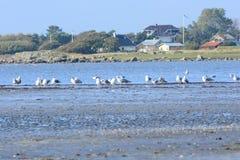 Seabirds przy brzeg Obrazy Royalty Free