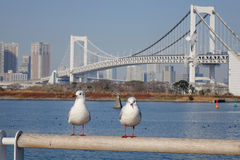 Seabirds relax at the Odaiba park in Tokyo, Japan Royalty Free Stock Photography