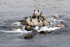 Seabirds resting on rocks in the ocean. A group of seabirds resting on rocks in the ocean Royalty Free Stock Photography