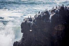 Seabirds on rock Stock Photo