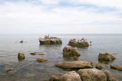 Seabirds on rocks in sea Royalty Free Stock Image
