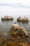 Seabirds on rocks in sea Stock Photo