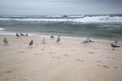 Seabirds on sandy beach Royalty Free Stock Photo