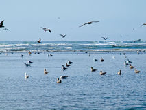 Seabirds at the Seashore Stock Image