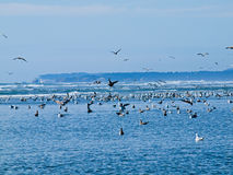 Seabirds at the Seashore Stock Photography