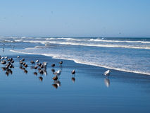 Seabirds at the Seashore Stock Photo