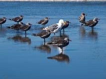Seabirds at the Seashore Royalty Free Stock Photos