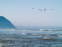 Seabirds at the Seashore Stock Images