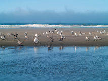 Seabirds at the Seashore Royalty Free Stock Photo