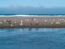 Seabirds at the Seashore Royalty Free Stock Photo