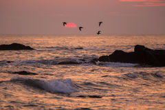Seabirds and setting sun, St. Bride's, Newfoundland Stock Photography