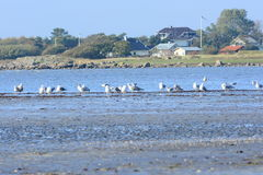 Seabirds at the shore Royalty Free Stock Images