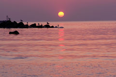 Seabirds silhouetted on water royalty free stock image