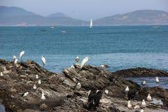 Seabirds vaggar på på sjösidan Royaltyfri Fotografi