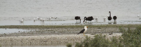 Seabirds and Waterbirds Stock Images