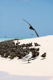 Seabirds on white sand Royalty Free Stock Photo