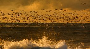 Seabirds in the wild stock photography