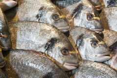 Seabream Royalty Free Stock Photos