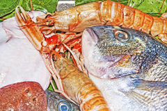 Seabream, sole and fresh prawns Stock Photography