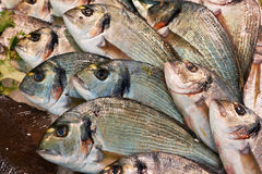 Seabreams on fish market Royalty Free Stock Photography
