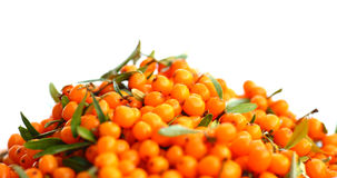 Seabuckthorn. Berries (Hippophae rhamnoides). This product contain the plenty of vitamin C Royalty Free Stock Images