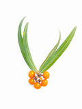 Seabuckthorn Photo libre de droits