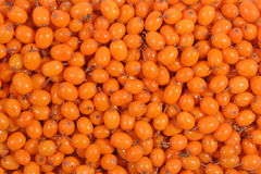 Seabuckthorn as background texture. Top view of seabuckthorn as background texture Stock Photos