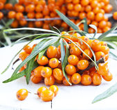 Seabuckthorn Berries Royalty Free Stock Image