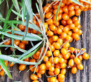 Seabuckthorn Berries. On Wooden Background Stock Photography