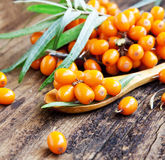 Seabuckthorn Berries. On Wooden Background Royalty Free Stock Image