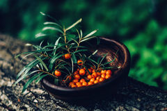 Seabuckthorn berries. In a wooden bowl Royalty Free Stock Photo