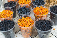Seabuckthorn, currant and cranberries Royalty Free Stock Photo