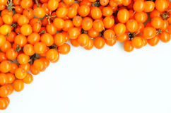 Seabuckthorn on a white background Royalty Free Stock Photos