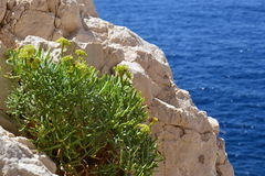 Seacliffs vegetation Stock Photos