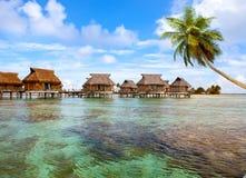 seacoast ладони ландшафта polynesian типичный Стоковое Изображение RF