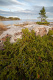 seacoast можжевельника Стоковые Фото