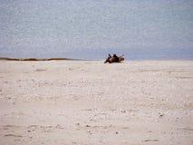 Seacoast Στοκ Εικόνες