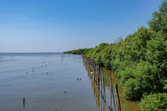 Seacoast av mangroveskogen royaltyfri bild