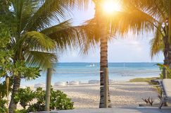Seacoast z drzewkami palmowymi fotografia stock