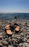 seacoasthäftklammermatare Arkivfoton