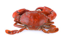 Seacrab Royalty Free Stock Photography